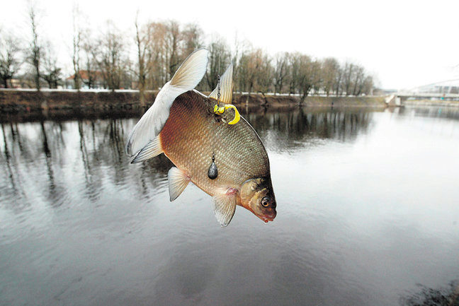 все о рыбалке на чудском